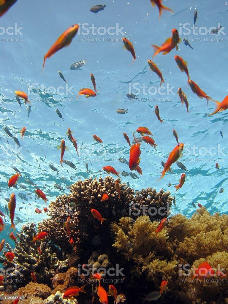 Coral Scene royalty-free stock photo
