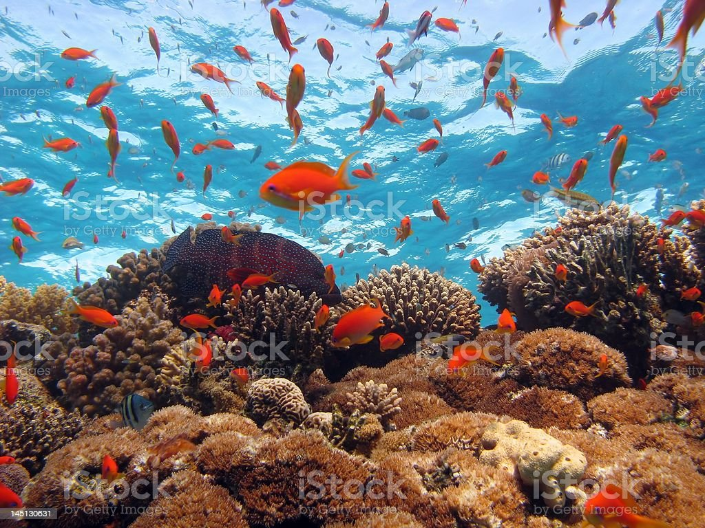 Coral Scene royalty-free stock photo