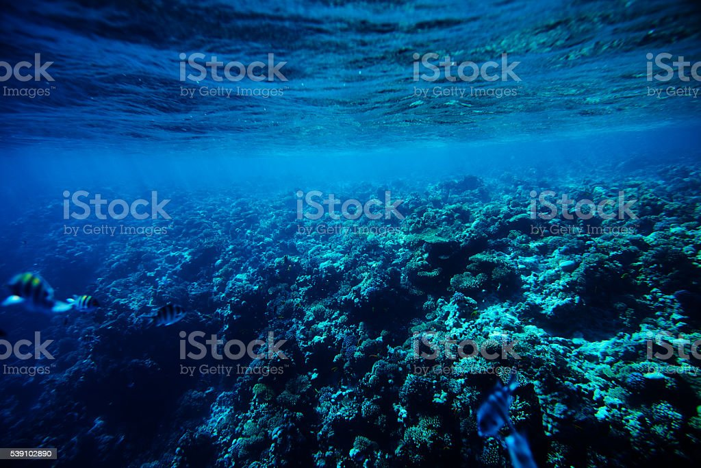coral underwater background stock photo