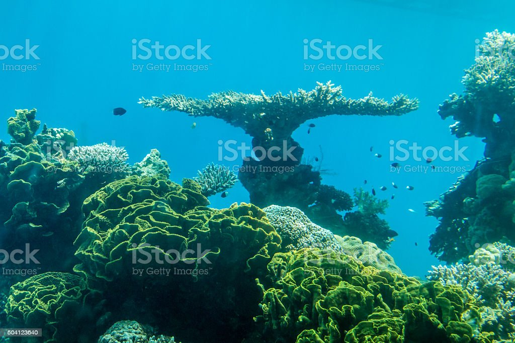 Coral world, Underwater Observatory in Eilat stock photo