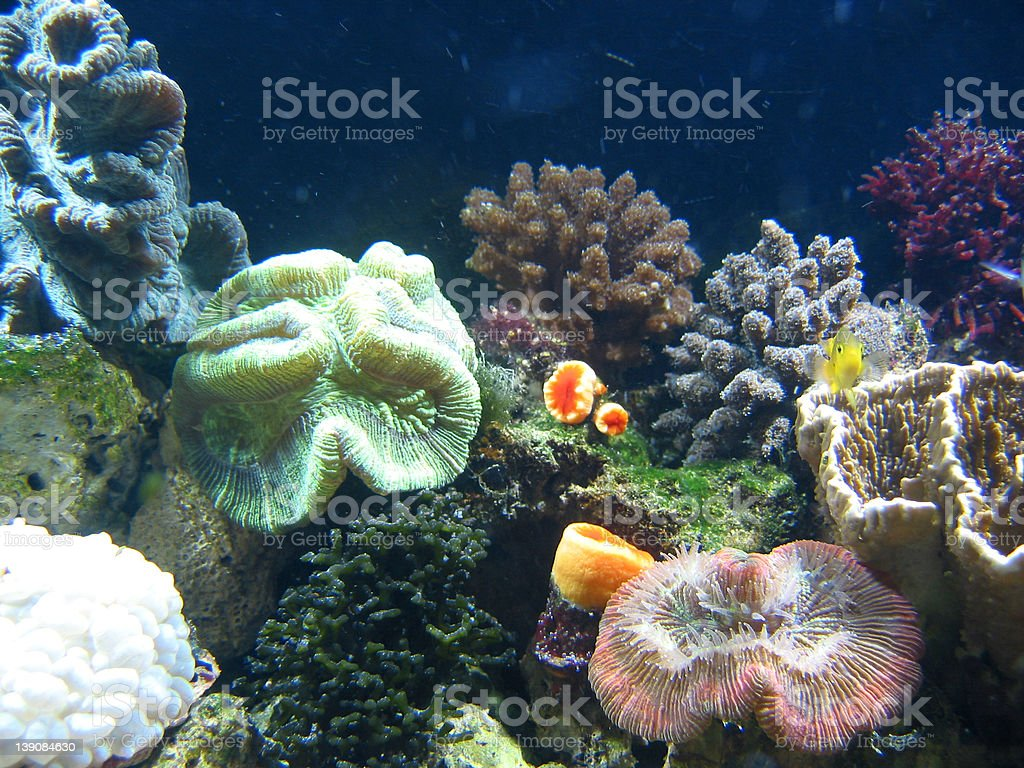 Coral03 stock photo