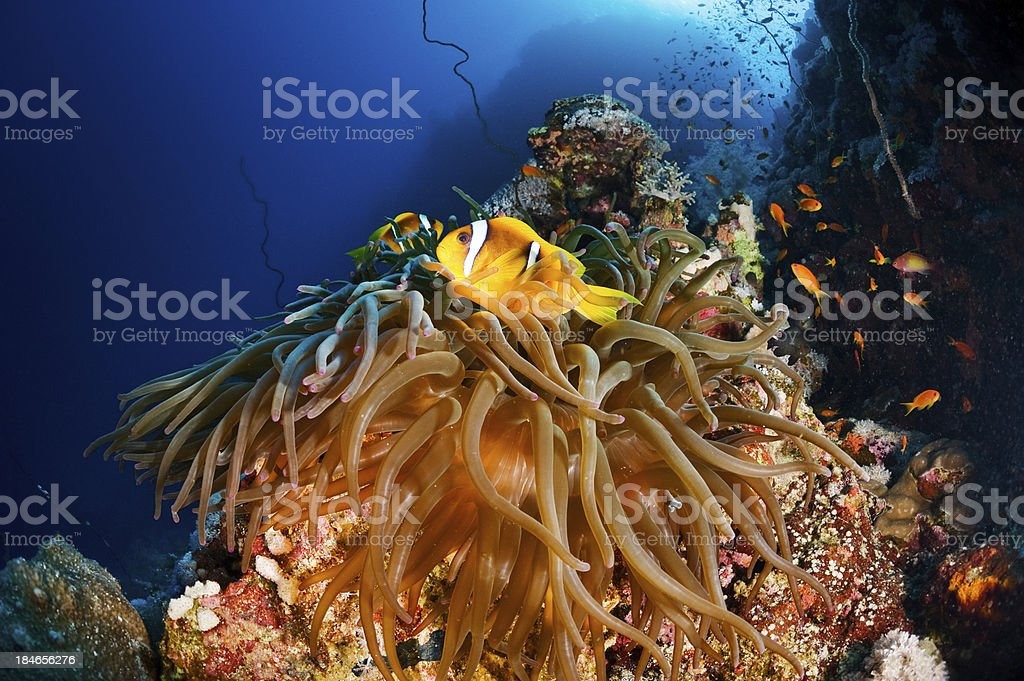 Corals and Fishes royalty-free stock photo