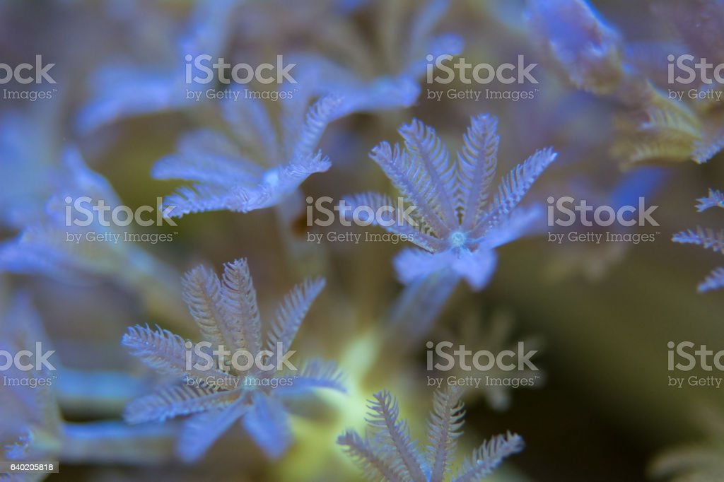 corals are very close stock photo