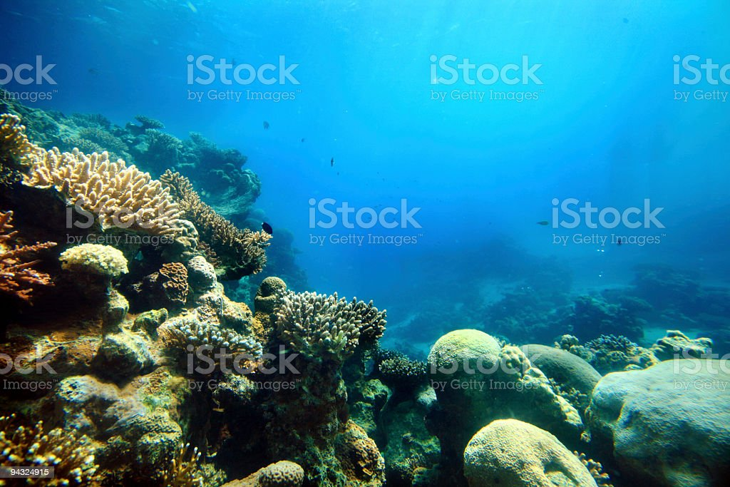 Corals deep in the sea royalty-free stock photo