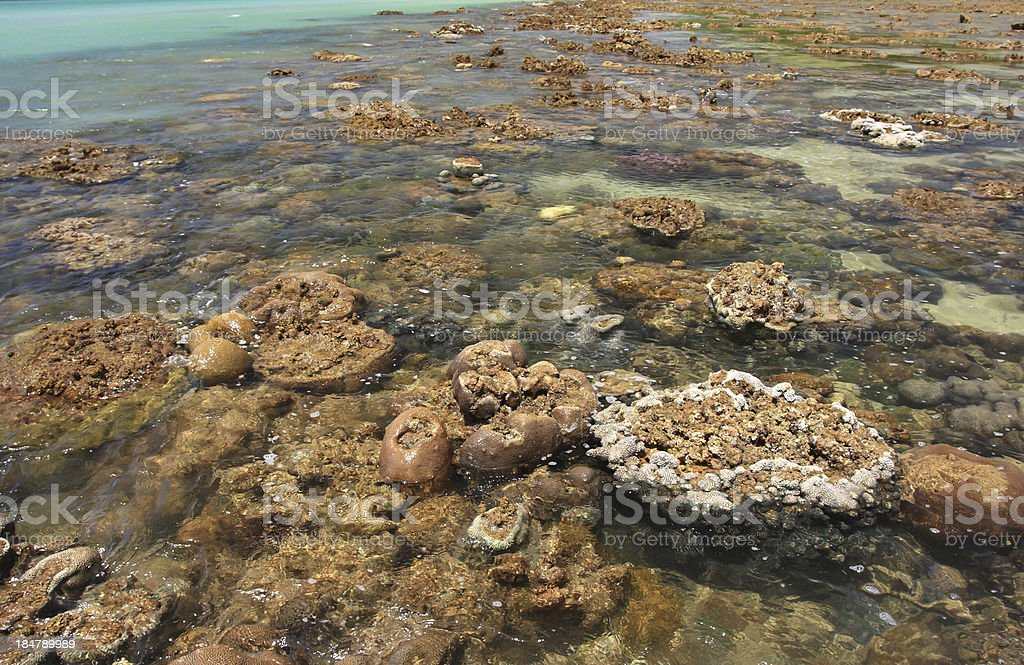 Corals in shallow waters during royalty-free stock photo