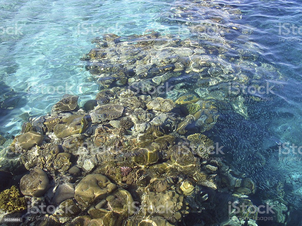 Corals reef in the Red Sea royalty-free stock photo