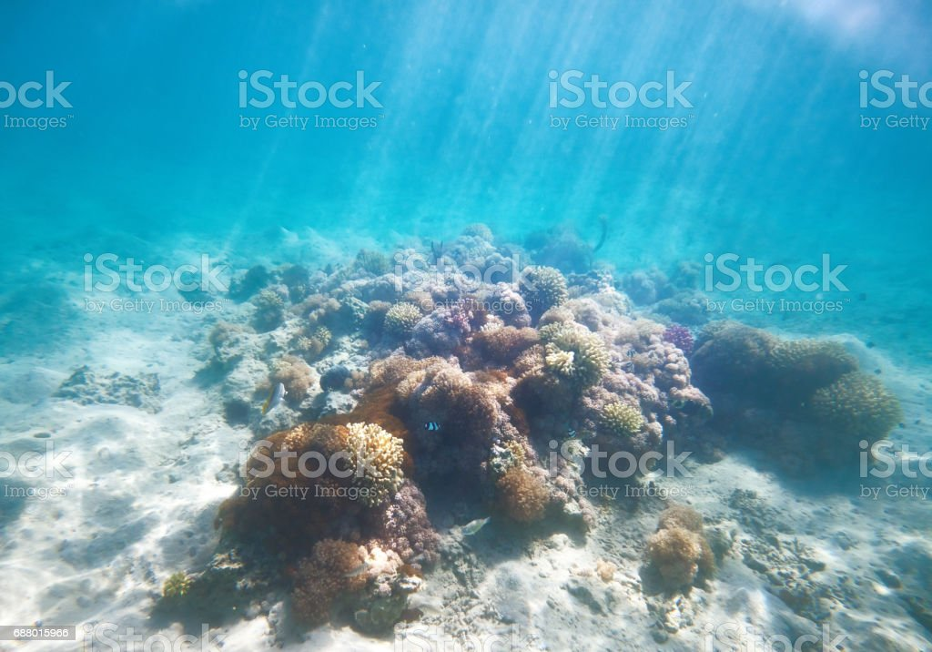 corals underwater in the sunlight stock photo