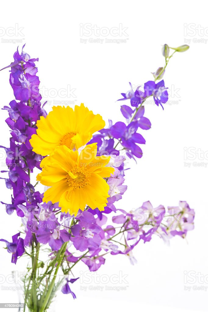 Coreopsis and Purple Larkspur Flowers stock photo