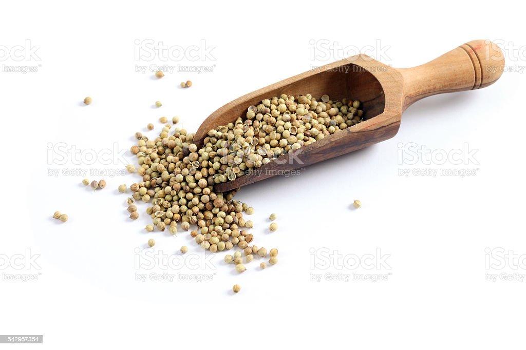 Coriander, cilantro seeds on white background stock photo