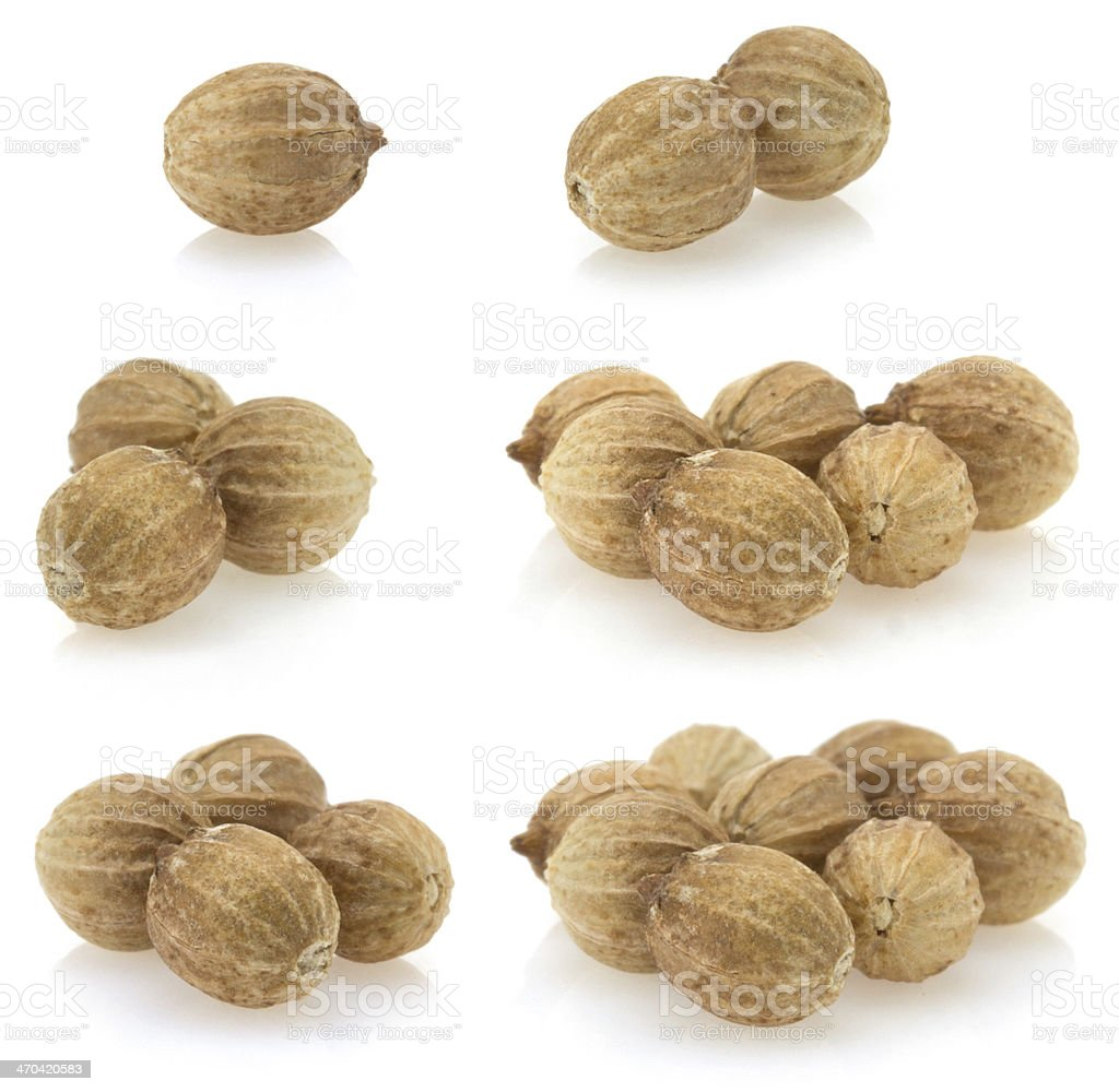 coriander on white background stock photo