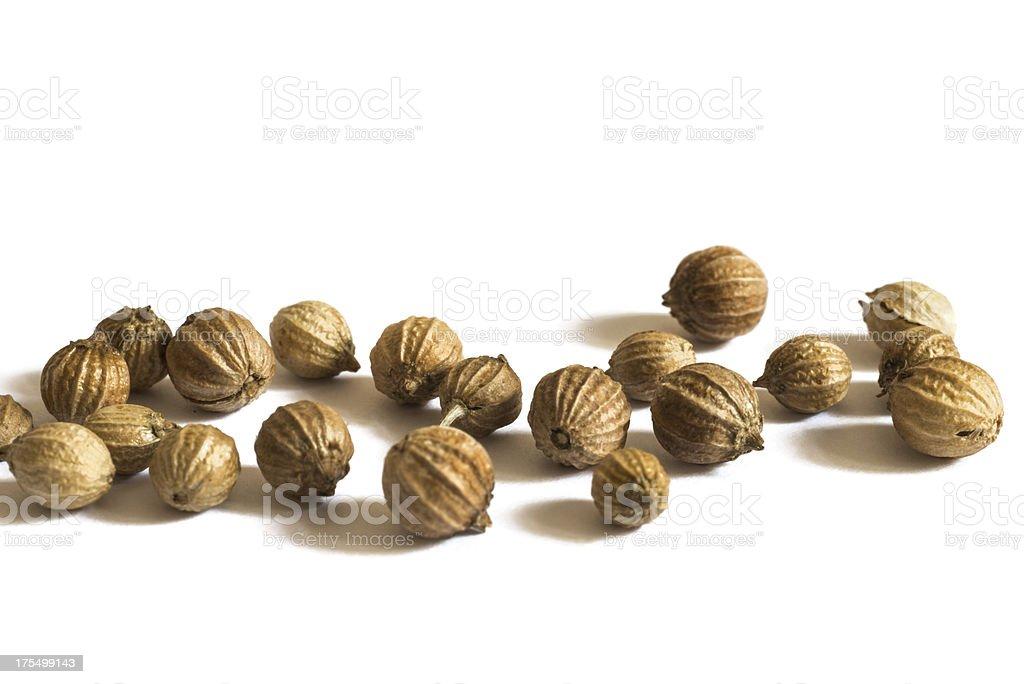 coriander royalty-free stock photo