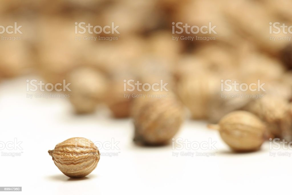 coriander seed macro stock photo