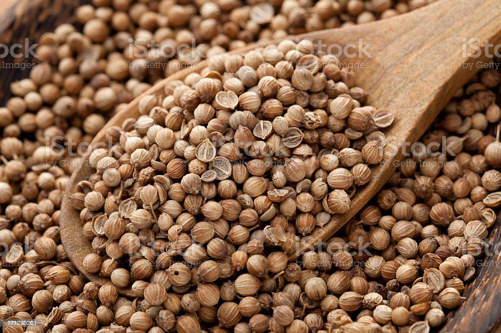 Coriander Seed royalty-free stock photo