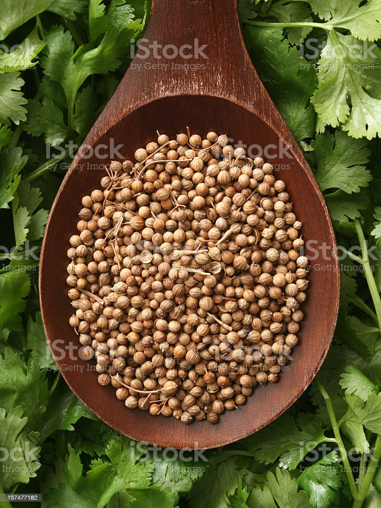 Coriander seeds and cilantro leaves royalty-free stock photo