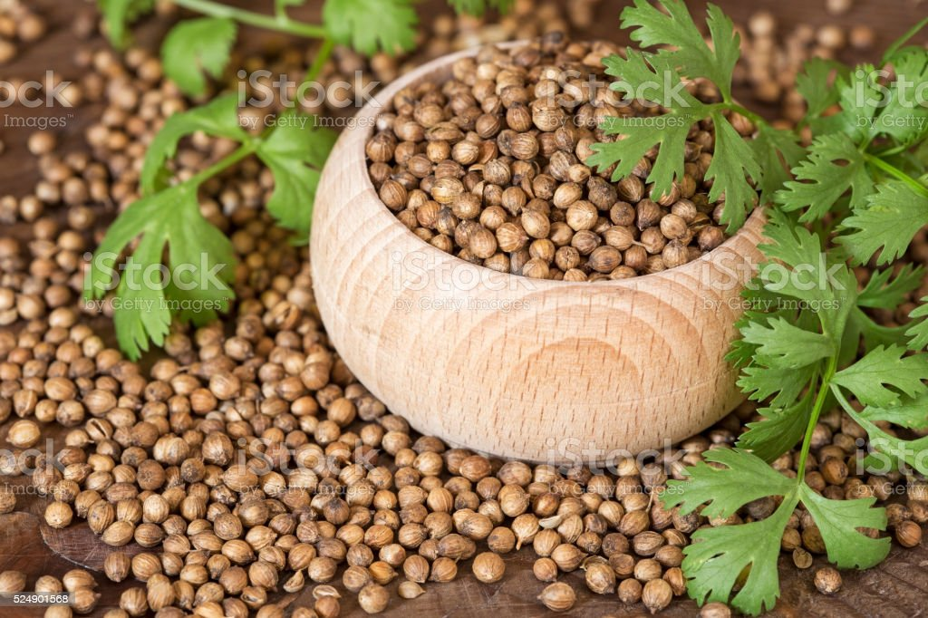 Coriander seeds and leaves stock photo
