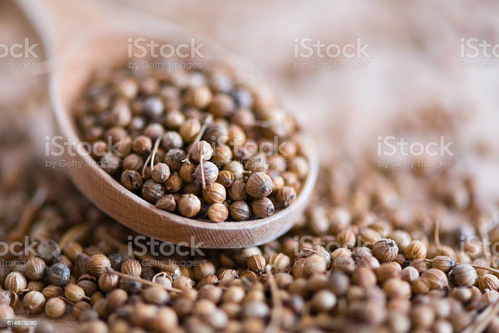 coriander seeds, close-up stock photo