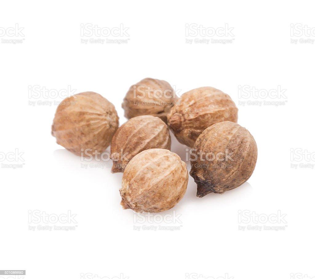 Coriander seeds on white background stock photo
