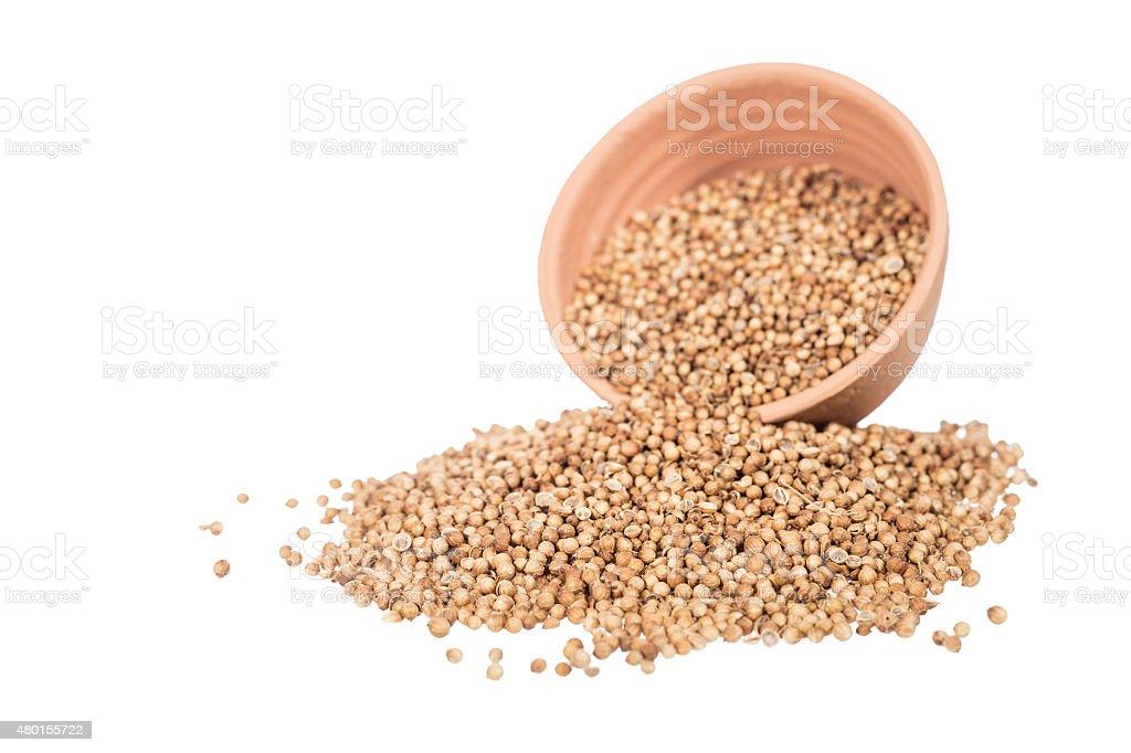 coriander seeds stock photo