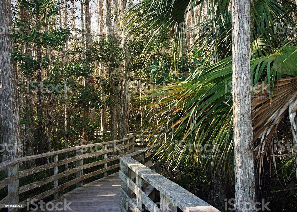 Corkscrew Sanctuary Florida royalty-free stock photo