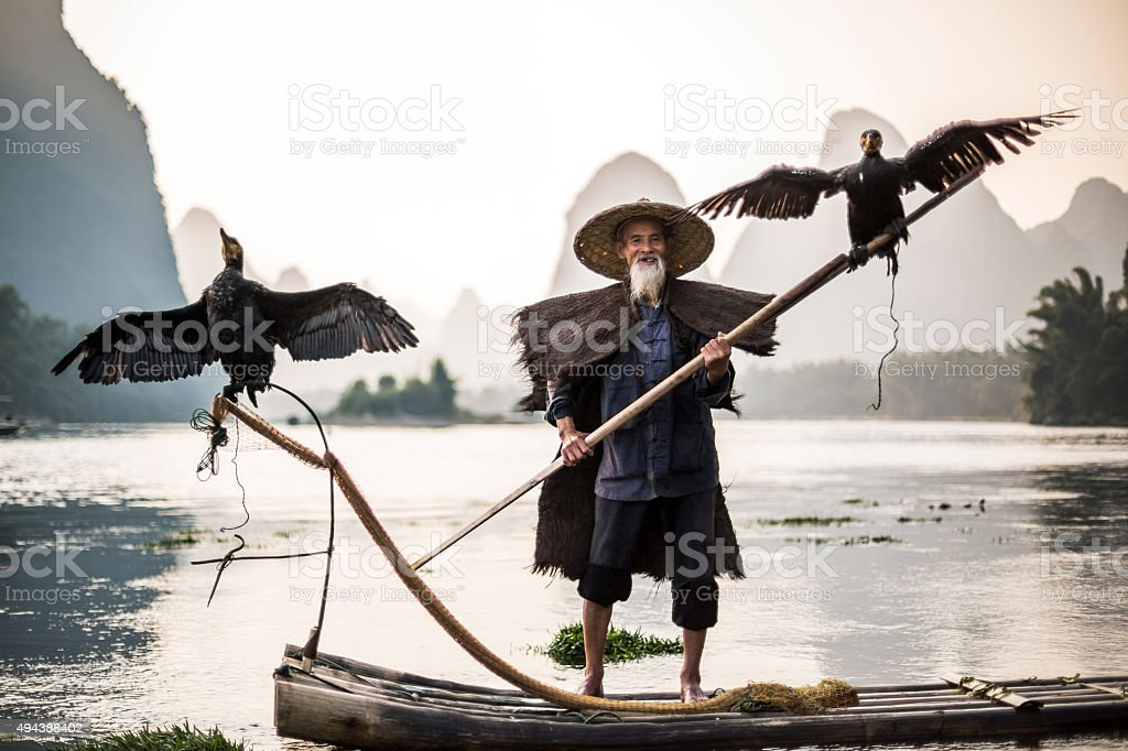 cormorant fisherman showing birds stock photo