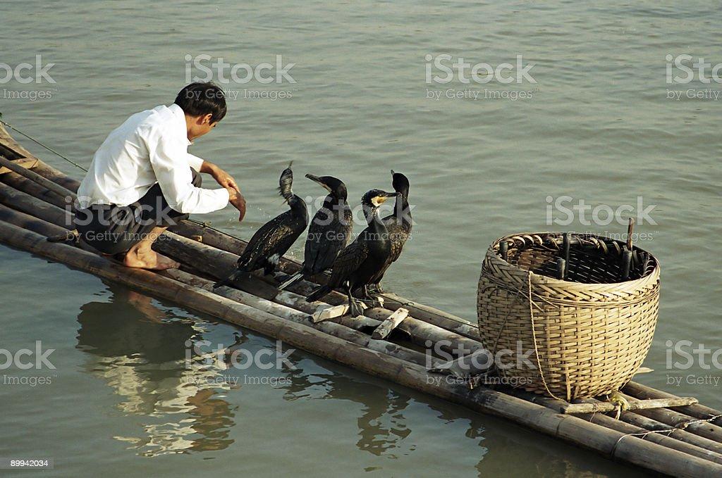 Cormorant Fishing stock photo