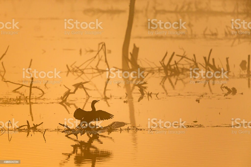 Cormorant in silhouette on a foggy morning on a lake stock photo