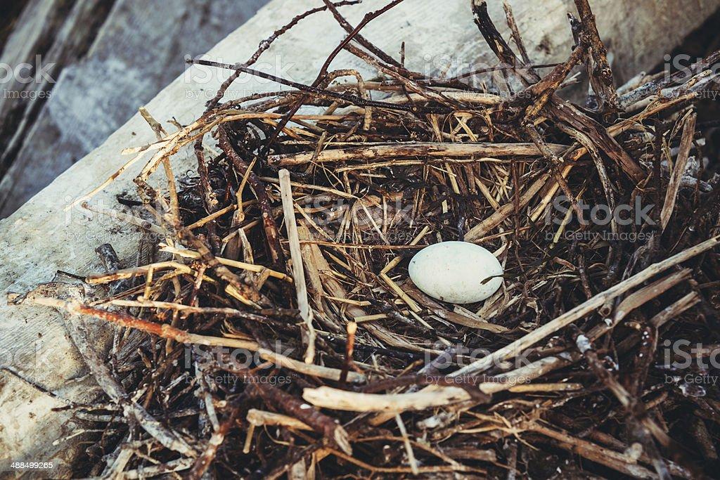 Cormorant Nest stock photo