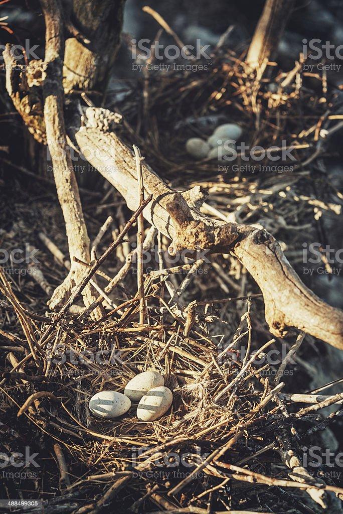 Cormorant Nests royalty-free stock photo