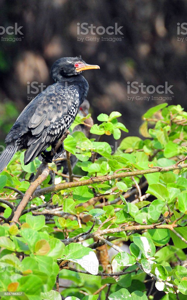 Cormorant perched on a tree branch stock photo