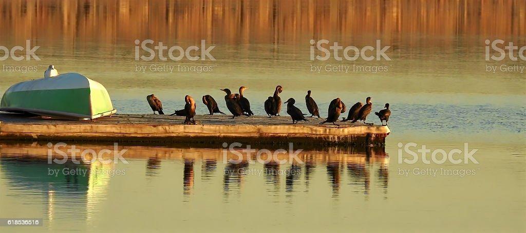 Cormorant Pier Reflection stock photo