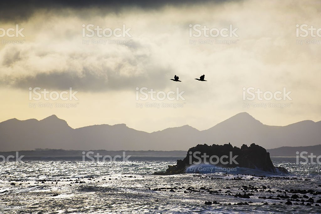 Cormorants in a storm royalty-free stock photo