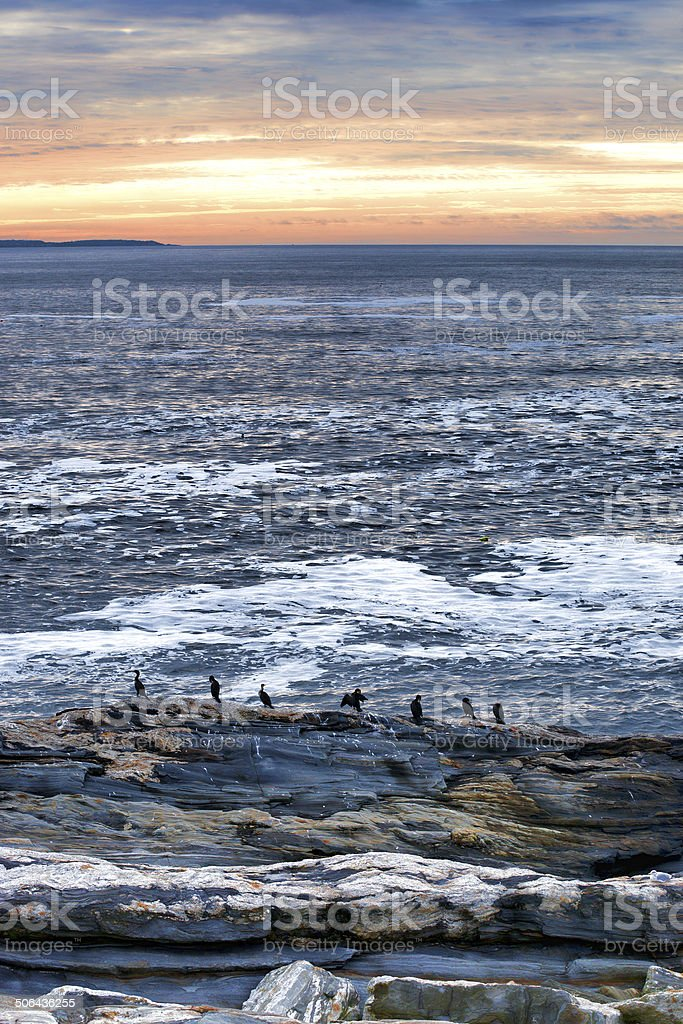 Cormorants on rock ledge at Pemaquid Point Maine stock photo