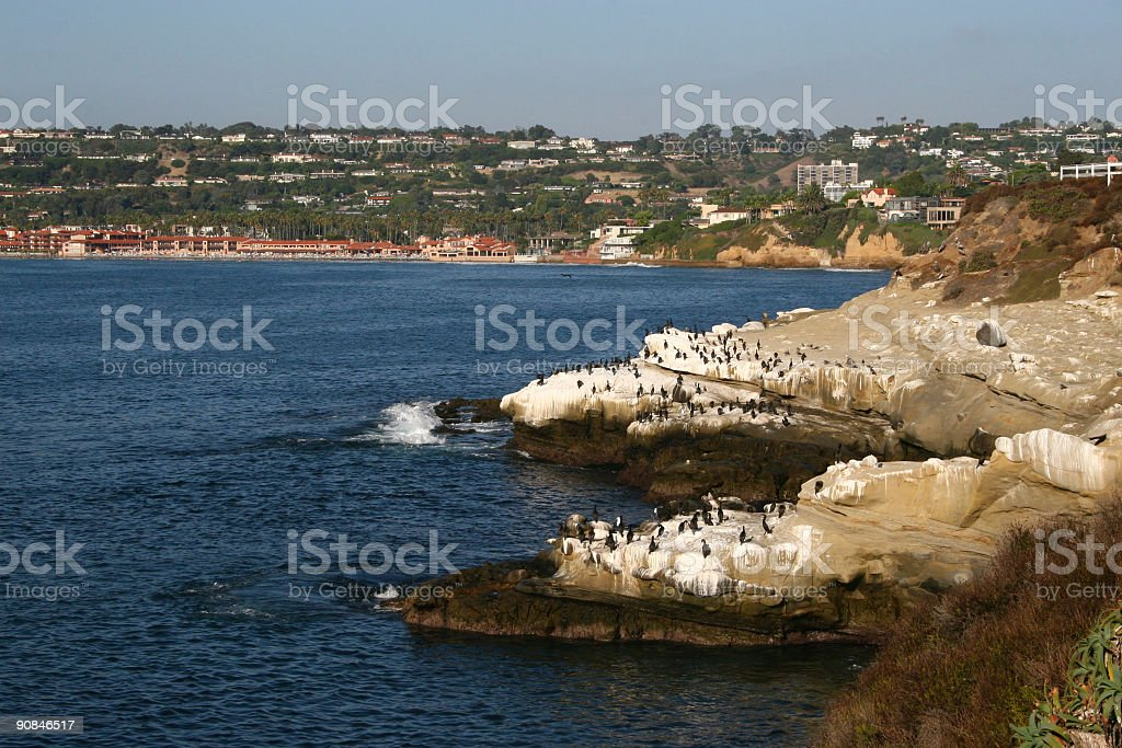 Cormorants on Rocks royalty-free stock photo