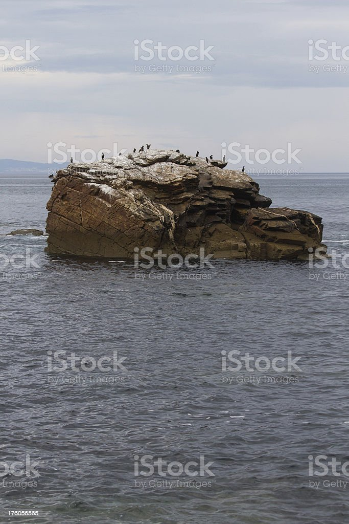 Cormorants on rocky island - Cormoranes en isla rocosa royalty-free stock photo