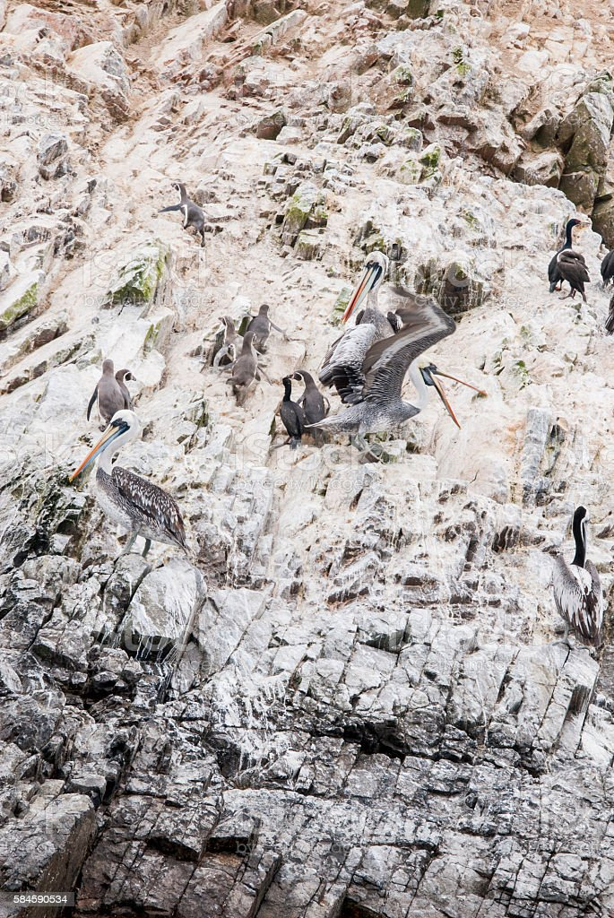 Cormorants, Penguins and Pelicans On The Ballestas Islands - Peru stock photo