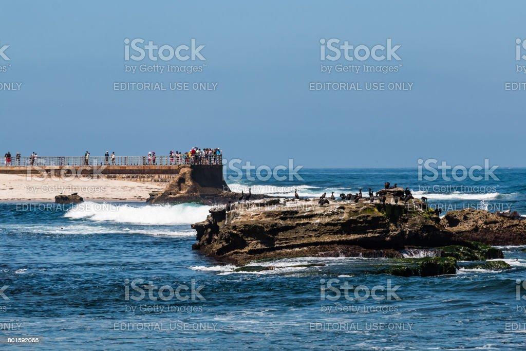 Cormorants Sit on Natural Rock Near La Jolla Children's Pool stock photo