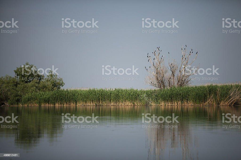 Cormorants tree stock photo