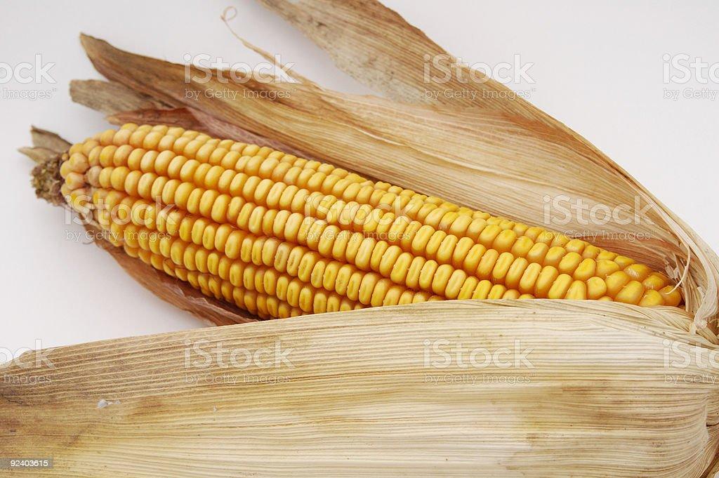 Corn 4 royalty-free stock photo