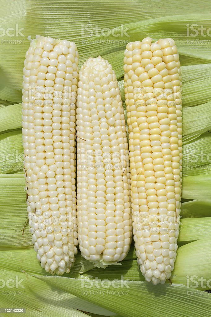 Corn against green leaves background. royalty-free stock photo