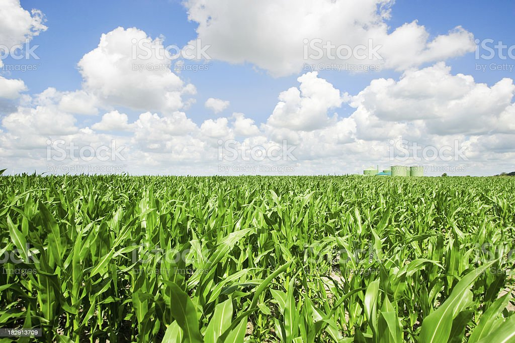 Corn and biogas royalty-free stock photo
