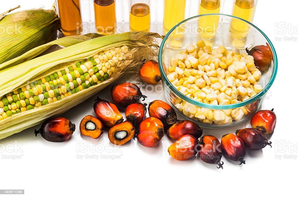 Corn and Oil Palm ethanol in test tubes, with BIOFUEL stock photo