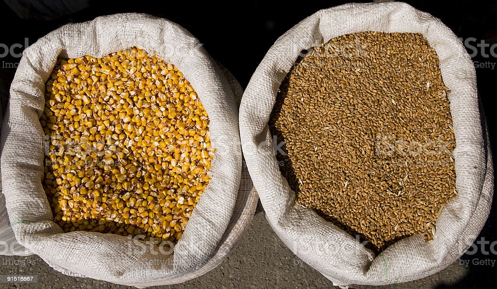Corn and Wheat royalty-free stock photo
