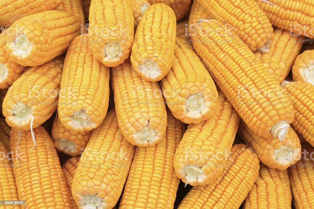 corn bonzi material stock photo