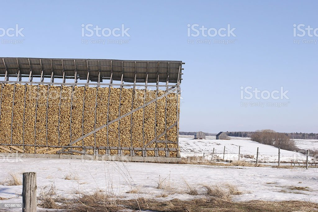 Corn buffet royalty-free stock photo