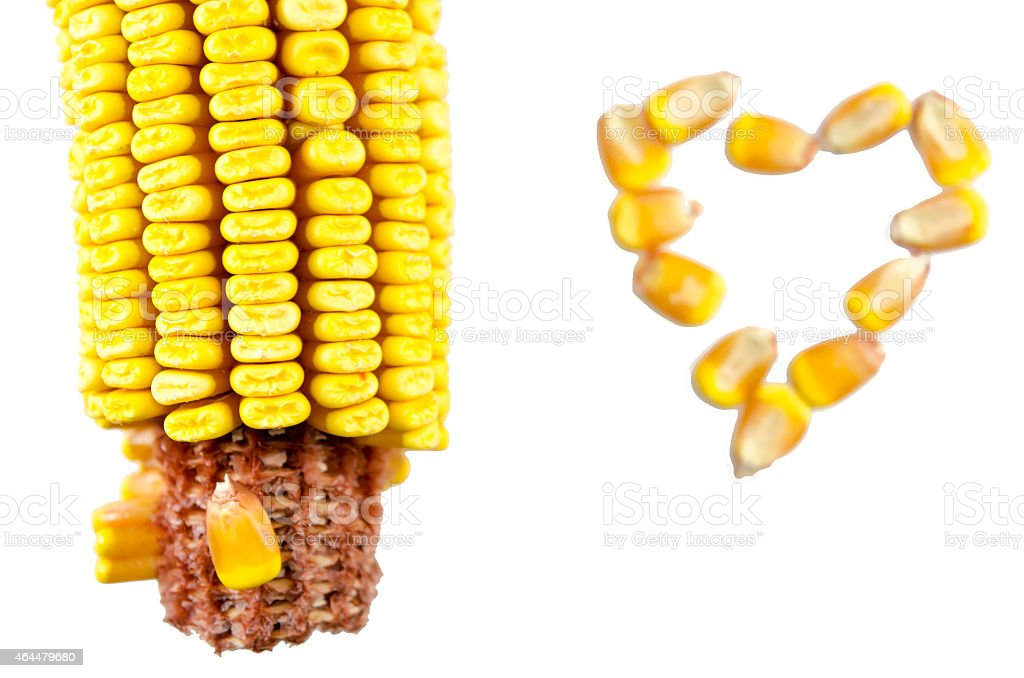Corn cob and a corn heart isolated royalty-free stock photo