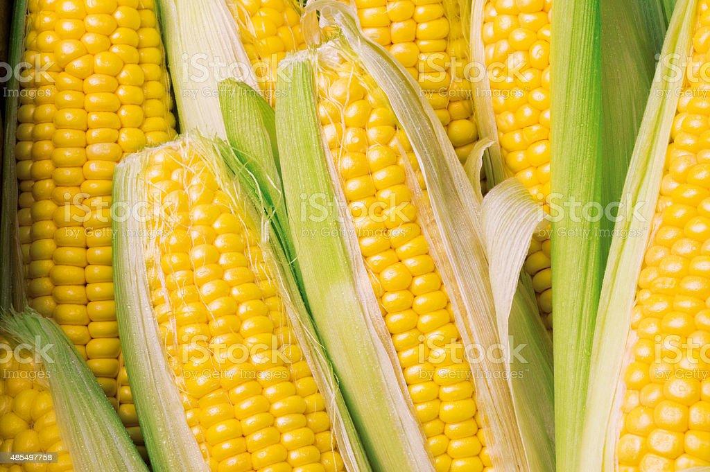 Corn cob, fresh maize stock photo