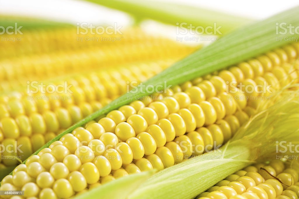 Corn cob with leaves royalty-free stock photo
