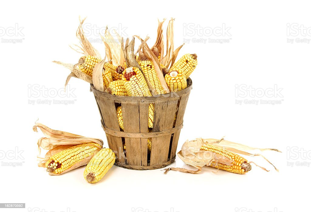 Corn Cobs In a Basket stock photo