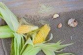 Corn cobs on a sackcloth