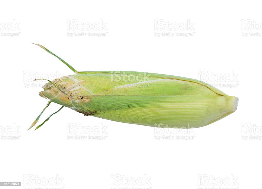Corn Cobs on White Background stock photo
